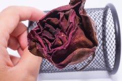 Flor color de rosa muerta imágenes de archivo libres de regalías