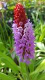 Flor coloreada brillante del jardín Fotos de archivo libres de regalías