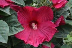 Flor coloreado vino Foto de archivo libre de regalías