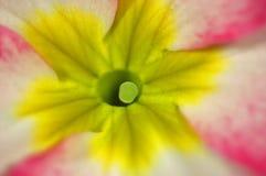Flor colorida Foto de Stock Royalty Free
