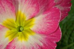 Flor colorida Imagem de Stock