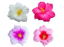 Flor colorida. Imágenes de archivo libres de regalías