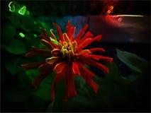 Flor colorida Foto de archivo