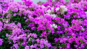 Flor colorida fotografia de stock