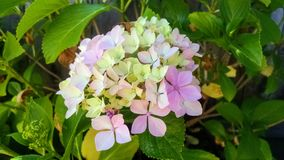 Flor colorida Imagens de Stock Royalty Free