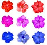 Flor colorida aislada Fotos de archivo