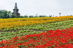 Flor colorida arquivada e casa Foto de Stock