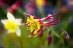 flor colorida brilhante Imagens de Stock Royalty Free