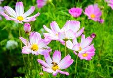 Flor colorida con la captura de la abeja Fotos de archivo libres de regalías