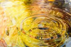 A flor colorida da reflexão da água e a água deixam cair Fotografia de Stock Royalty Free