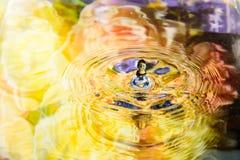 A flor colorida da reflexão da água e a água deixam cair Imagens de Stock Royalty Free