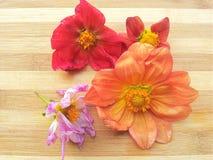 Flor colorida de la dalia en fondo de madera Imagen de archivo libre de regalías