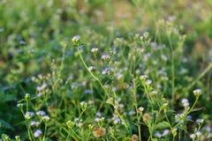 Flor colorida del prado de la primavera fotos de archivo