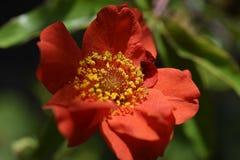 Flor colorida do verão em meu jardim na luz do sol Imagem de Stock