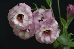 Flor colorida do verão em meu jardim na luz do sol Imagens de Stock Royalty Free