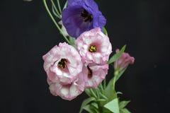 Flor colorida do verão em meu jardim na luz do sol Imagens de Stock