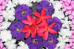Flor colorida en el agua Fotografía de archivo libre de regalías
