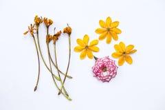 Flor colorida en el fondo blanco Fotos de archivo libres de regalías