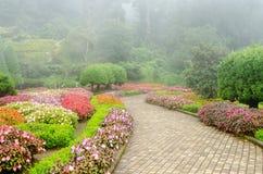 Flor colorida en jardín hermoso con niebla de la lluvia Fotos de archivo libres de regalías