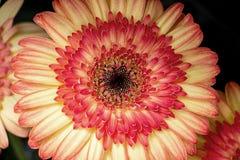 Flor colorida grande fotografía de archivo