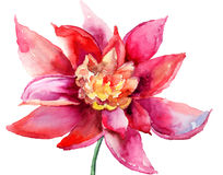 Flor colorida hermosa Imágenes de archivo libres de regalías