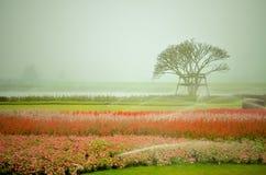 Flor colorida no jardim Foto de Stock Royalty Free