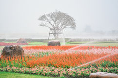 Flor colorida no jardim Imagens de Stock Royalty Free