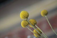 Flor com backround borrado Foto de Stock