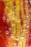 Flor com bolhas de ar Fotografia de Stock