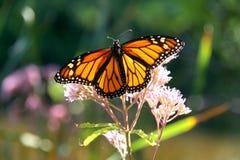 Flor com borboleta Foto de Stock