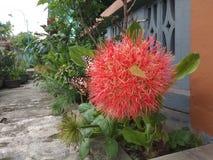 flor com a borboleta em East Java Indonésia com fotos de stock royalty free