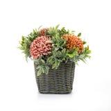 Flor com branco do plantador Imagens de Stock