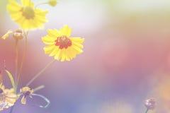Flor com a cor macia do foco filtrada imagem de stock