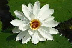Flor com erro imagem de stock royalty free