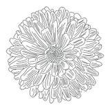 Flor com esboço das pétalas no vetor branco do fundo ilustração stock