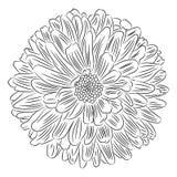 Flor com esboço das pétalas no vetor branco do fundo ilustração do vetor