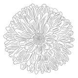 Flor com esboço das pétalas no vetor branco do fundo ilustração royalty free