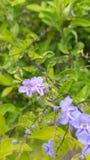 Flor com folha verde Imagens de Stock