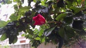 Flor com gota de Warer Imagem de Stock Royalty Free