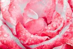 Flor com gotas da chuva Fotos de Stock