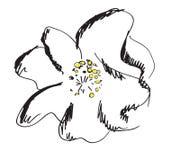 Flor com grandes pétalas Imagens de Stock Royalty Free
