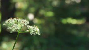 Flor com os insetos na região selvagem da floresta vídeos de arquivo