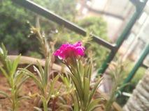 flor com parte superior fotografia de stock