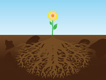 Flor com raiz Imagens de Stock