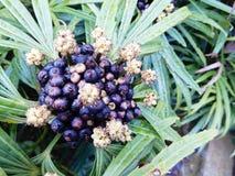 Flor com sementes Imagem de Stock