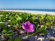 Flor com uma vista foto de stock royalty free