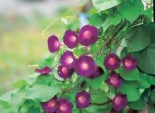 Flor com videira fotos de stock