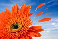 Flor com voo das folhas fotografia de stock royalty free