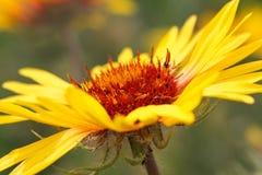 Flor combinada Fotografía de archivo libre de regalías