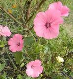 Flor completa vinda Wildflowers fotografia de stock